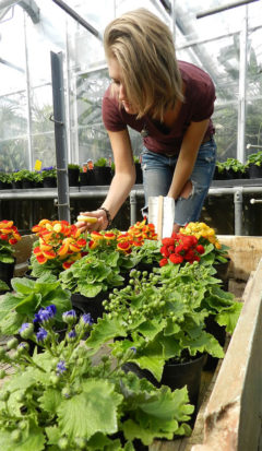 Senior horticulture major Emily Balder is conducting independent florticulture research.
