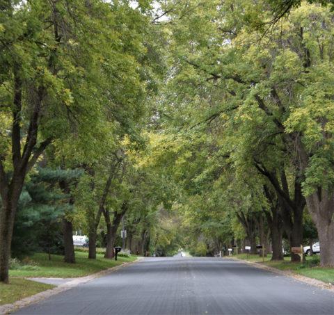 Wasson Lane trees
